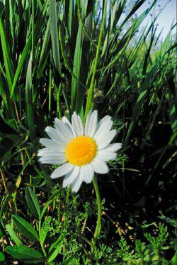 بعضی وقتا به هنگام راه رفتن مراقب جانداران اطراف خود باشید...همانگونه چه خدا با کمال بزرگی ما را هیچ وقت خرد نمیکند.......یه گل کوچیکدبین علفا پیدا کردم....واقعا کسی دلش میاد پاشو رو این بذاره؟؟؟ از وقتیاینو دیدم موقع راهرفتن فقط چشمم به پاهامه