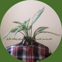 سبز شبزم ریشه دارم !!!