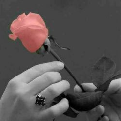به دست آور دل من را چه کارت با دل مردم! . تو واجب را بجا آور رها کن مستحب ها را...