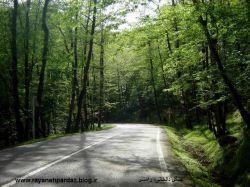 جنگل دالخانی-رامسر