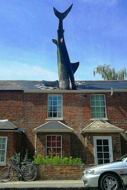 مجسمه کوسه آکسفورد