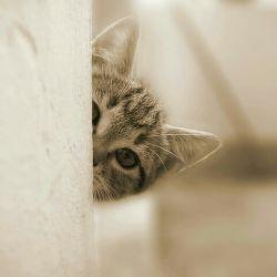 سلااااااااااام....من تازه به لنزور اومدم، خوشحال میشم دنبالم کنید.....و.....حتما لایک کنید....♥♥♥