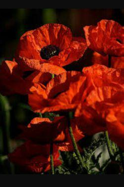 شاید آن روز که سهراب نوشت:تا شقایق هست زندگی باید کرد خبر از دله پر درده گل یاس نداشت باید اینگونه نوشت : هر گلی هم باشی چه شقایق چه گل پیچکه یاس زندگی اجباریست.....
