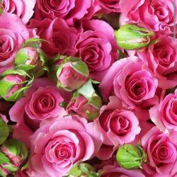 الإمام الرضا علیه السلام :   الصَّلاةُ عَلى مُحَمَّدٍ وآلِهِ تَعدِلُ عِندَ اللَّه عزّ و جلّ التَّسبیحَ وَالتَّهلیلَ وَالتَّكبیرَ .....  امام رضا علیه السلام :  صلوات فرستادن بر محمّد و خاندان او ، در نزد خداوند ، همسنگ گفتنِ «سبحان اللَّه» و «لا إله إلّا اللَّه» و «اللَّه أكبر» است ....اللهم صل علی محمدوآل محمدوعجل فرجهم.