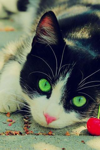 وقتی به گربه میخوای غذا بدی مثلا شیر میزاری جلوش دسستو چنگ میزنه هر چقدر بهش محبت و خوبی کنی اون چنگ میزنه#گربه صفت