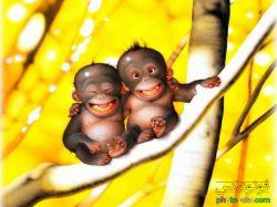 بسر ایرونیییییییییییییییی.....عینه میمونیییییییییییییییییییییییی........!!