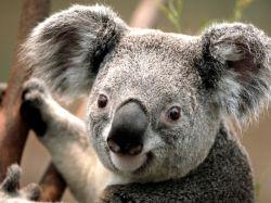 این حیوون درون استرالیا فقط وجود داره!شما نمیدونید اسمش چیه؟