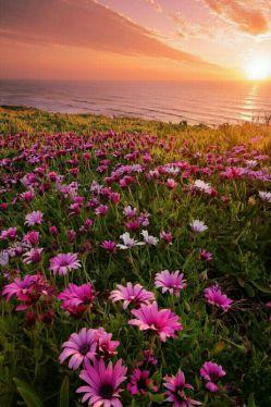 ____ بهشت جای قشنگیست *** جای دوری نیست *** بهشت باغ بزرگیست *** باغ آغوشت  ____ #نغمه_مستشارنظامی