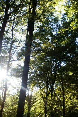 جنگل پاسند روستای بهشهر