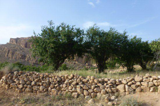 مراتع و آرام های روستای ابرسج