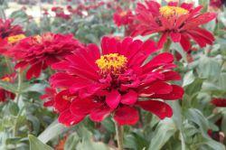 گلی درپارک تجن ساری (گرفته شده توسط خودم)