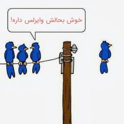 پرنده ها هم وایرلس دار شدن :)