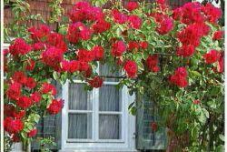 گلهای زیباتقدیم به دوستای عزیزم