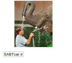 اینم نتیجه فیل بازی