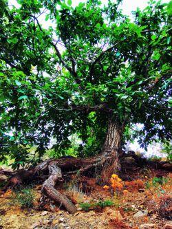 افتاده درختی که به خود می بالید / از داغ تبر به خاک غم مینالید / گفتم چه کسی به ریشه ات زد گفتا / آن کس که به زیر سایه ام می خوابید