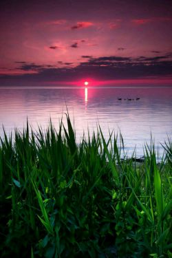زلال باشیدپرندگان به برکه های آرام پناه میبرندوانسانهابه دلهای پاک ''زیرادلهای پاک همچون برکه های آرامندودیگران بدون هیچ وحشتی به آنهااعتمادمیکنند''پس خوشابه حال کسانی که مایه آرامش دیگران هستند وخود نیازمند ستایش که پاکترین هستند