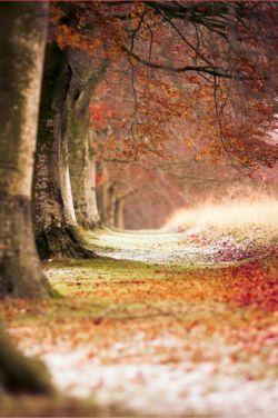 درد دل مرا فقط برگه های خشکیده می فهمند رنگ دل مرا فقط پاییز می داند و حجم اندوهش را فقط برگ ریزان درختان پاییزی می دانند
