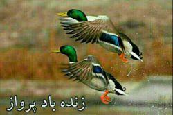 زنده باد پرواز....