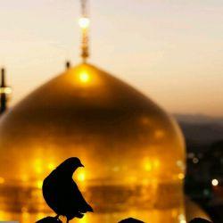 خوش به حاله اونایی ک الان مشهدن..... منم دلم مشهد میخواد=(...   ...همگی عیدون مبارک.... ( ̄3 ̄)~♥
