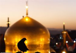کبوترم هوایی شدم ببین عجب گدایی شدم  دعای مادرم بوده که منم امام رضایی شدم  http://shokoohebaftan.mihanblog.com/post/87