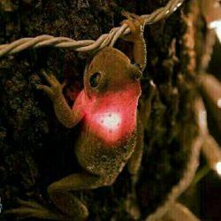 بیچاره لامپ ریسه عروسی قورت داده الانم شده غوری لامپ خوری ...
