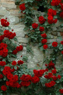 امیدوارم دیوار دلتون همیشه پرازگلهای سرخ وزیبا باشه