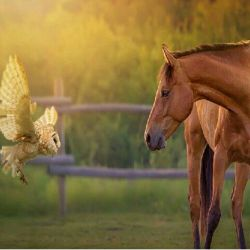 #حیوانات
