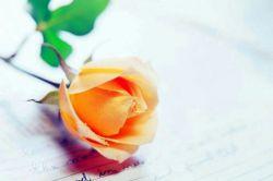 ای دوست ما همانیم که با یاد تو مستیم هنوز از دوری تو جام به دستیم هنوز در خلوت خود یاد ما باش که ما در خلوت خود یاد تو هستیم هنوز.