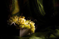 فصل انگورهای خوشمزه ملایر