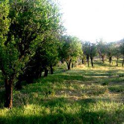 طبیعت زیبا...دیروزاینجابودم..درختای بادام تو ی دهات متروکه!!