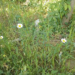 گل زیبا در خداافرین