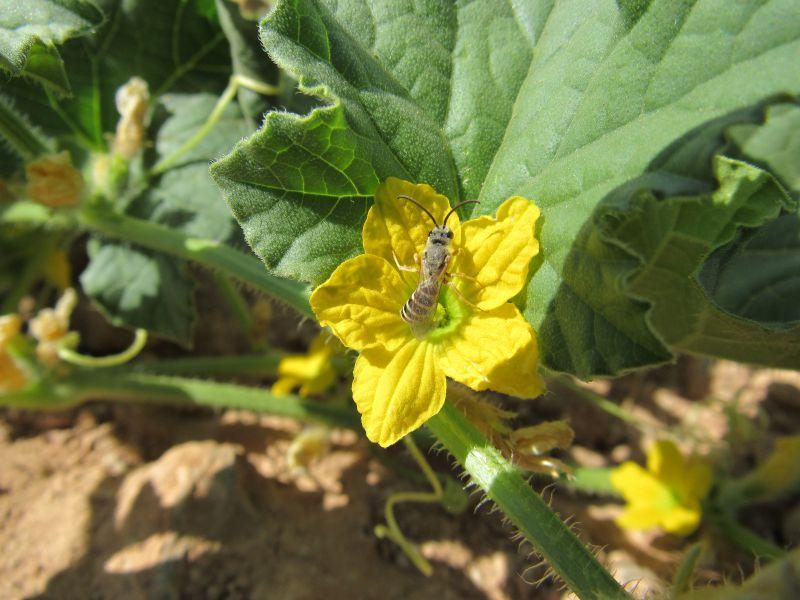 گل خیار، چهار محال و بختیاری، سامان