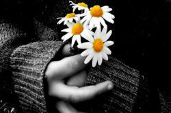# مپرس از من چرا در پیله ی مهر تو محبوسم که عشق از پیله های مرده هم پروانه می سازد