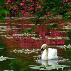 تو با شرافتی اگر... آبروی دیگران را مانند آبروی خودت محترم بدانی تو آزادی، اگر... خودت را کنترل کنی، نه دیگران را تو مهربانی، اگر... وقتی دیگران مرتکب اشتباهی میشوند، آنها را ببخشی. تو شادی، اگر... گلی را ببینی و بخاطر زیباییش خدا را شکر کنی. تو ثروتمندی، اگر... بیش از آنچه نیاز داری نداشته باشی. و دوست داشتنی هستی، اگر... دردهایت تو را از دیدن دردهای دیگران کور نکرده باشد... اگر چنین است به بزرگیت افتخار کن...