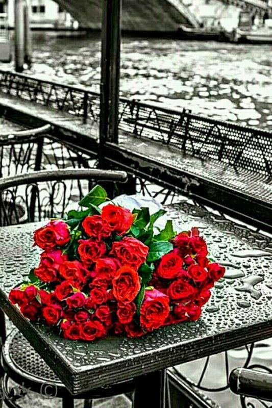 """زندگی باید کرد ...  گاه با یک گل سرخ ...  گاه با یک دل تنگ ...  گاه باید رویید در پس یک باران ...  گاه باید خندید بر غم بی پایان ...  زندگی باور می خواهد ...  آن هم از جنس امید ...  هر کجا خسته شدی ...  یا که پر غصه شدی ...  تو بگو از ته دل ...  """"من خدا را دارم"""" ..."""