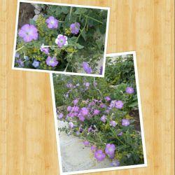 گل های باغچه خودمون تقدیم به دوست خوبم.