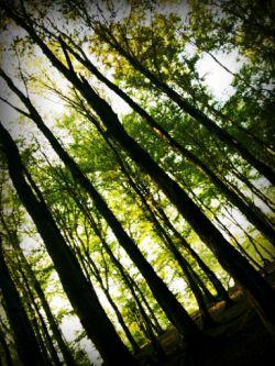 جنگل عباس آباد بهشهر