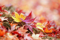 برگ های پاییزی سرشار از شعور درخت اند و خاطرات سه فصل را به دوش می کشند آرام قدم بگذار... بر چهره تکیده ی آن ها این برگ ها حرمت دارند از پاییز مهرش برای تو برگ ریزش برای من...