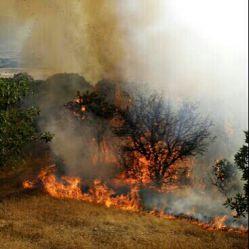 آتش گرفتن جنگل بلوت .مریوان