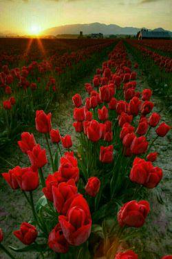 مسیر آرزوهاتون گلباران...: )