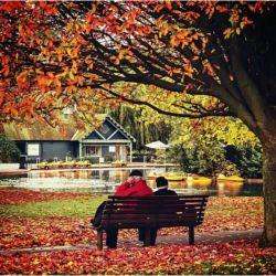می پسندم پاییز را که معافم می کند از پنهان کردن دردی که در صدایم می پیچد.اشکی که در نگاهم می چرخد ،آخر همه می دانند سرما خورده ام....!!