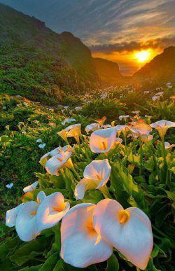 دوشنبه ام را با نام زیبایت آغاز میکنم بسم الله النور..... خدای عاشق...... یک صبح زیبای دیگر را با ترنم  دلنشین پرندگانت آغاز نمودم شکر ، برای یکروز زیبای دیگر شكر ، برای بوی خوش زندگی شکر و هزاران شکر، برای وجود ارزشمند عزیزانم شكر، برای سلامتی جسم و جان شكر، برای رزق و روزی حلال و بی نیازی.... بارالها؛ چتر رحمتت را بر سر دوستانم همیشه بازنگه دار و بهترین تقدیرها را برایشان رقم بزن....