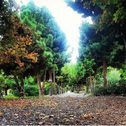 باغ ارم، شیراز