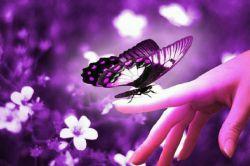 اگر یقین داری روزی پروانه خواهی شد، بگذار دنیا هر چه میخواهد پیله کند..