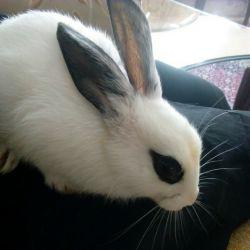 اینم خرگوش کوچولوی من!!!