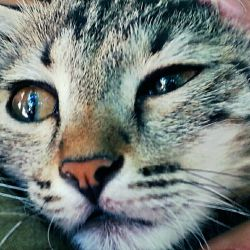 هکتور...بچه گربه باحال من