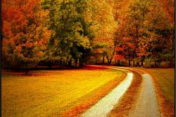 پاییز زیبا و عروس فصل هاست، برگ ریزان درخت و خواب ناز غنچه هاست، خش خش برگ و نسیم باد را بی انتهاست، هرچه خواهی آرزو  کن، فصل  فصل قصه... ⛄مهرتان قشنگ، پائیزتان مبارک⛄