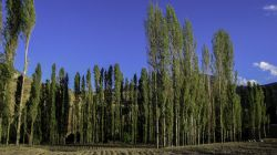Iran - Semnan - Shahrood - Village Golestan /// photo by : Mohammad Sarayloo