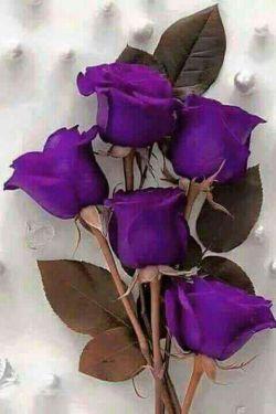 این گل تقدیم به تک تک دوستای لنزوری عیدتون مبارک.