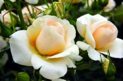 فریاد کن بگو که دل از دست داده ای  در عاشقی نشانِ رضایت سکوت نیست !